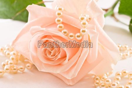 blomst plant plante rose perler halskaede