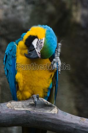 dyr fugl fugle papegojer tropiske tropical