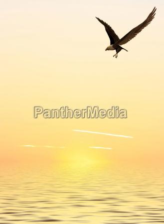 solnedgang eagle saltvand havet ocean vand