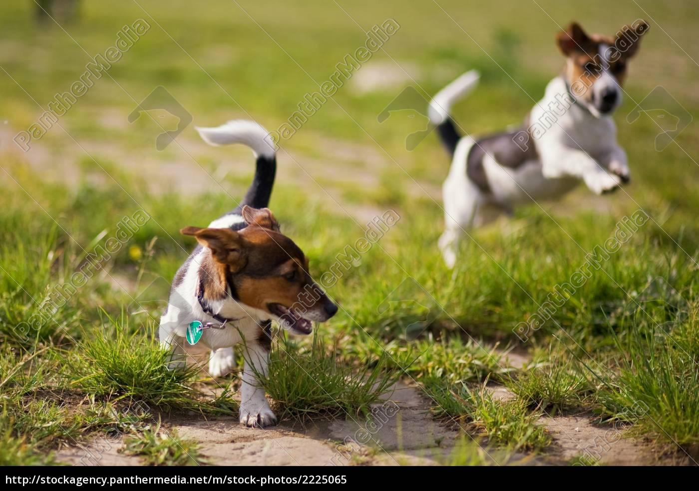 afspilning, af, hunde - 2225065
