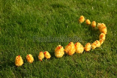 easter chicks wandering