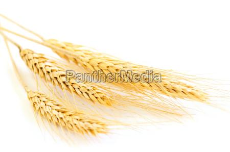 isolerede hvede orer