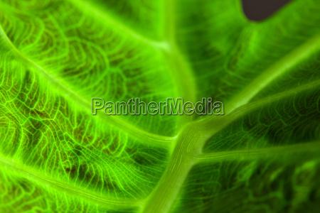 abstrakt leaf macro