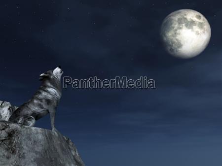 nat nattetid mane hyl hylende ulv