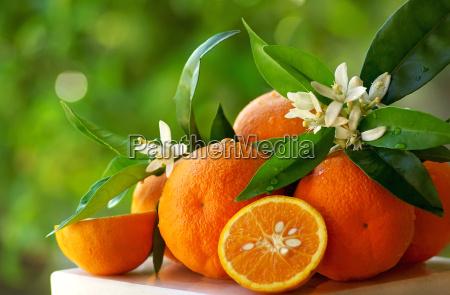 modne orange og blomster