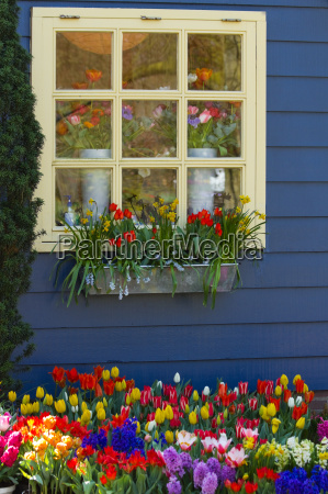 azul jardim janela flor flores planta