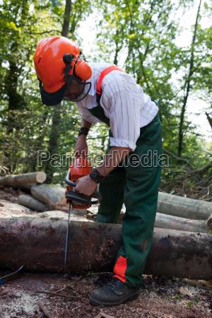 trae traeer falde skovarbejdere faldt skov