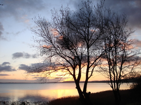 trae traeer solopgang himmel firmament saltvand