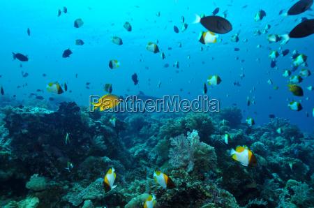 dykning pa apo reef