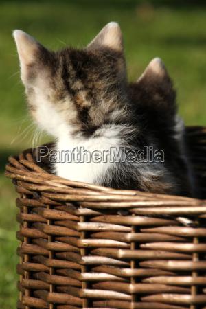 basket puppy behind multi coloured cat
