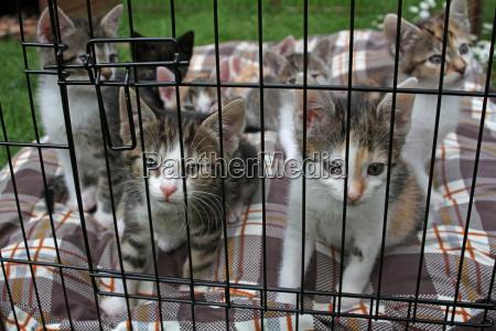 kittens in einerm cage
