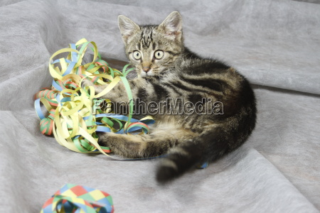 cats baby playing with streamers