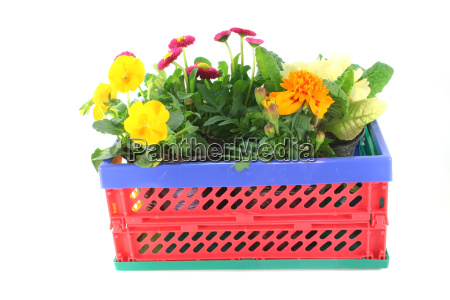 balcony plants in a folding box