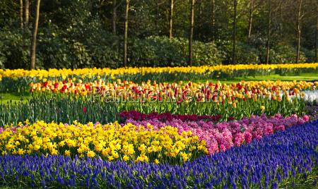 flower beds in spring garden