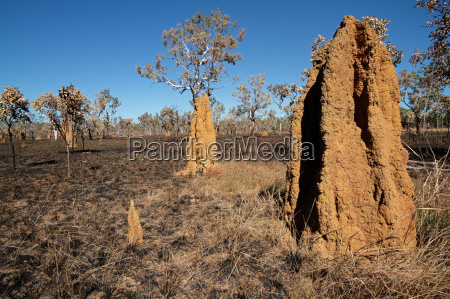 cathedral termite mounds australien