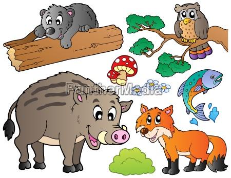 dyr bjorn fauna vild vilde vildt