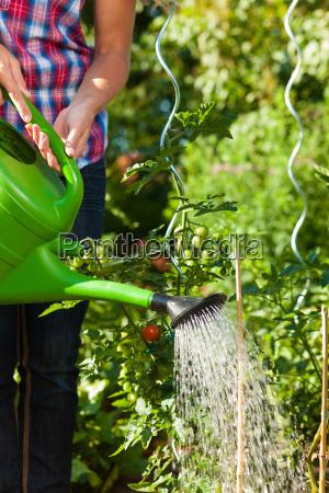 havearbejde i sommer kvinde vanding