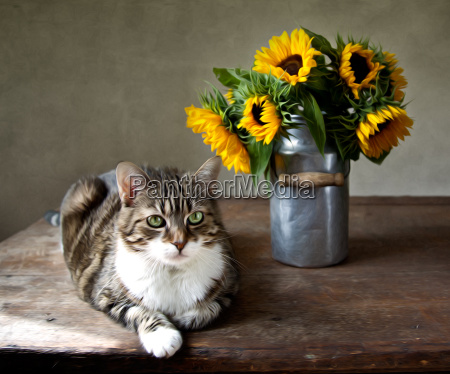 cat and sunflowers