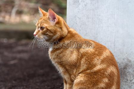 portraet af en pet kat