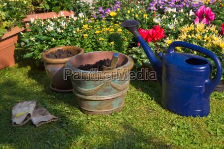 nye planter i urtepotter til efteraret