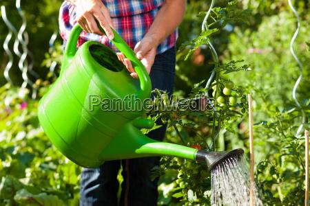 kvinde have sommer sommerlig gartner havearbejde