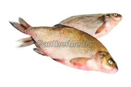 to friske ferskvandsfisk