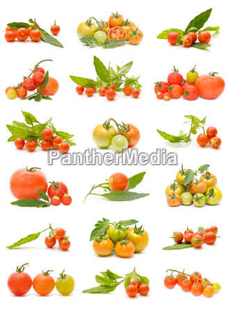 okologiske tomater