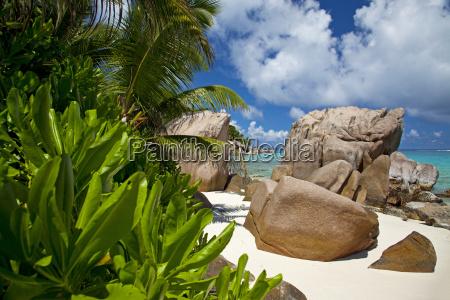 paradisiske strand med eksotiske planter