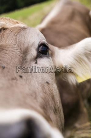 flyv i ojet af ko