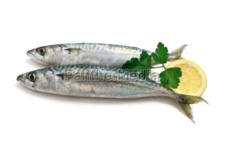 to makrel med citron