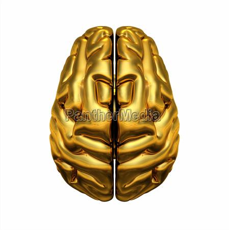 gold brain ovenfra