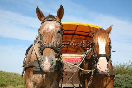 turisme hest heste udflugt traener horse