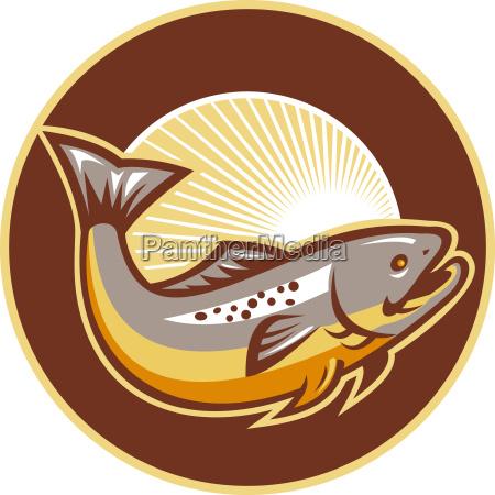 Orred fisk hoppe solstrale