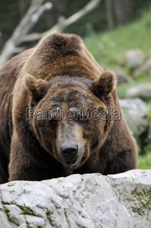 pels pelsfrakke pelskabe frihed dyreliv styrke