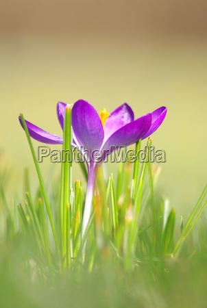 miljo blomst blomster plant plante forar