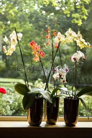potes de plantas com orquideas de