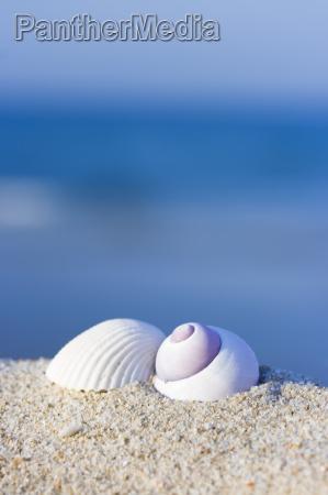 muslingeskaller pa stranden