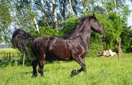 horses friezes in nature