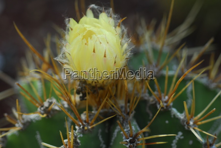yellow flower on green cactus plant