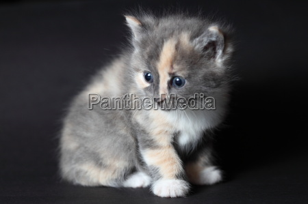 young little cat