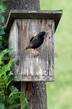 bird animals birds nest starling aviary