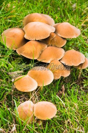 lukke blad brun hat skove vad