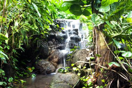 vandfald i regnskoven