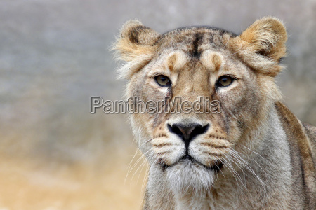 afrika dyr love kat katte lover