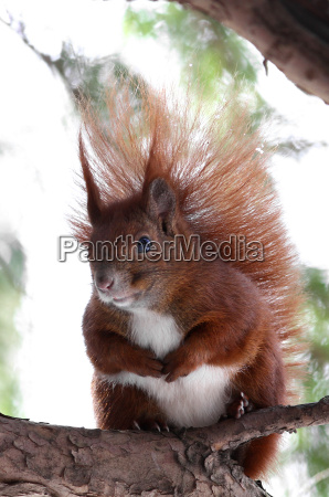 dyr kaebe wildlife egern