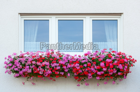 blomst plant plante vindue gardiner glasagtig