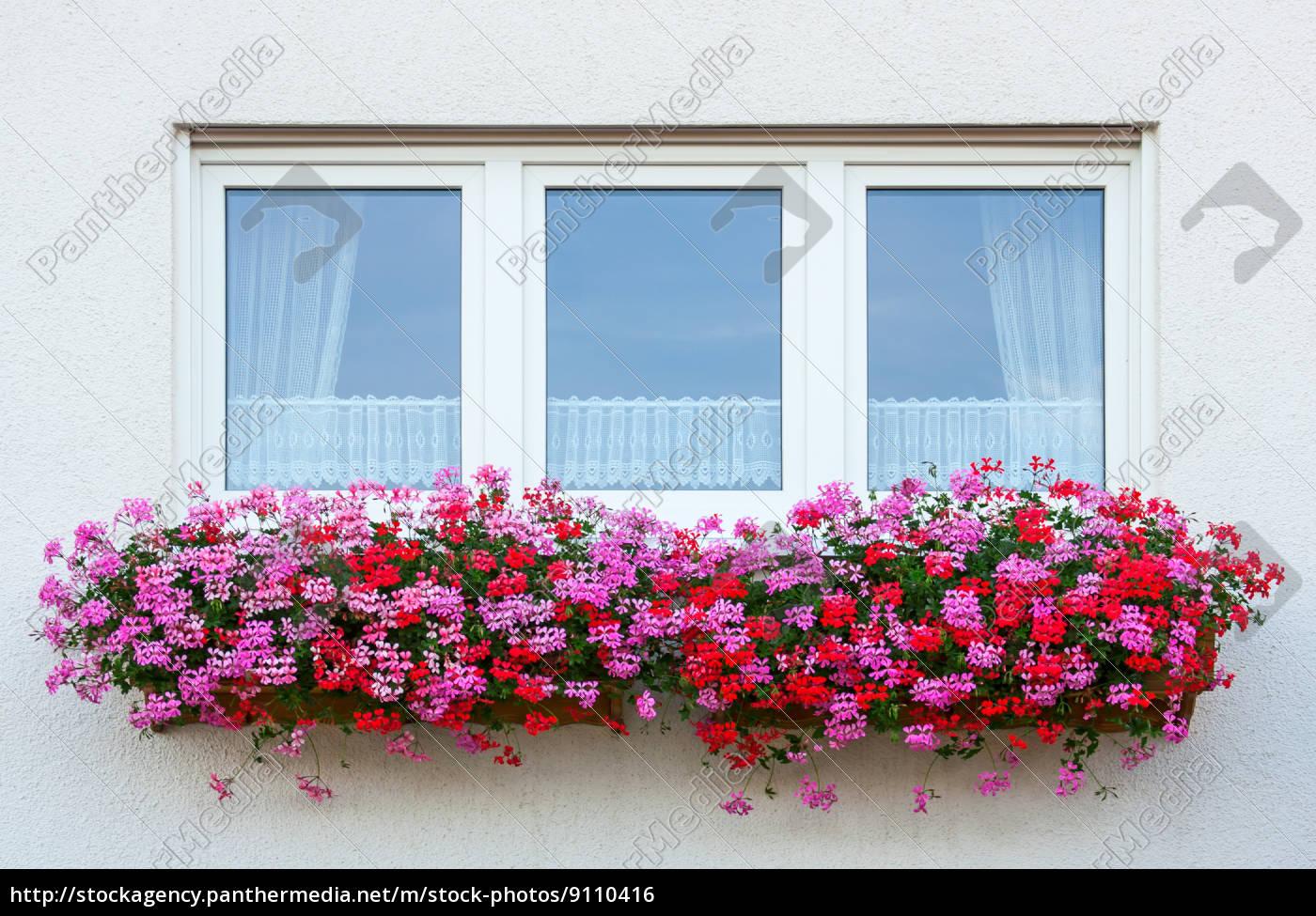 blomst, vindue - 9110416