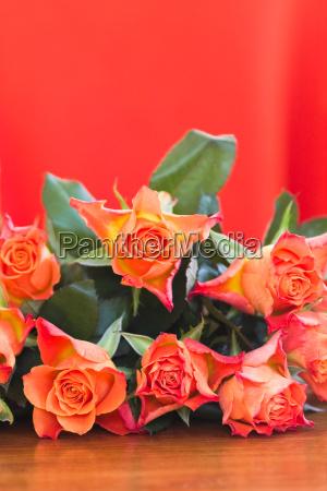 orange roser