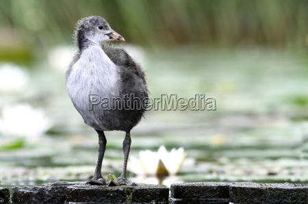 miljo dyr fugl fugle aender natur
