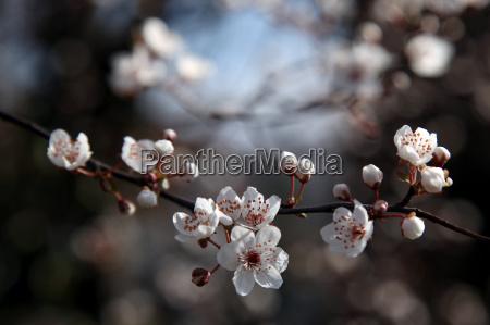 makrooptagelse close up naerbillede trae blomstre